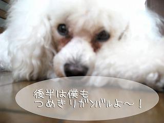 ぱすたツメキリ.jpg