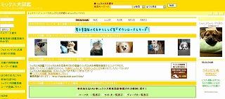ミックス犬.jpg